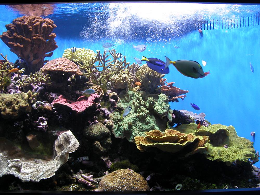 Get premium water for your aquarium